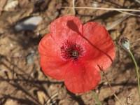 Biosistemica - Fiore Rosso